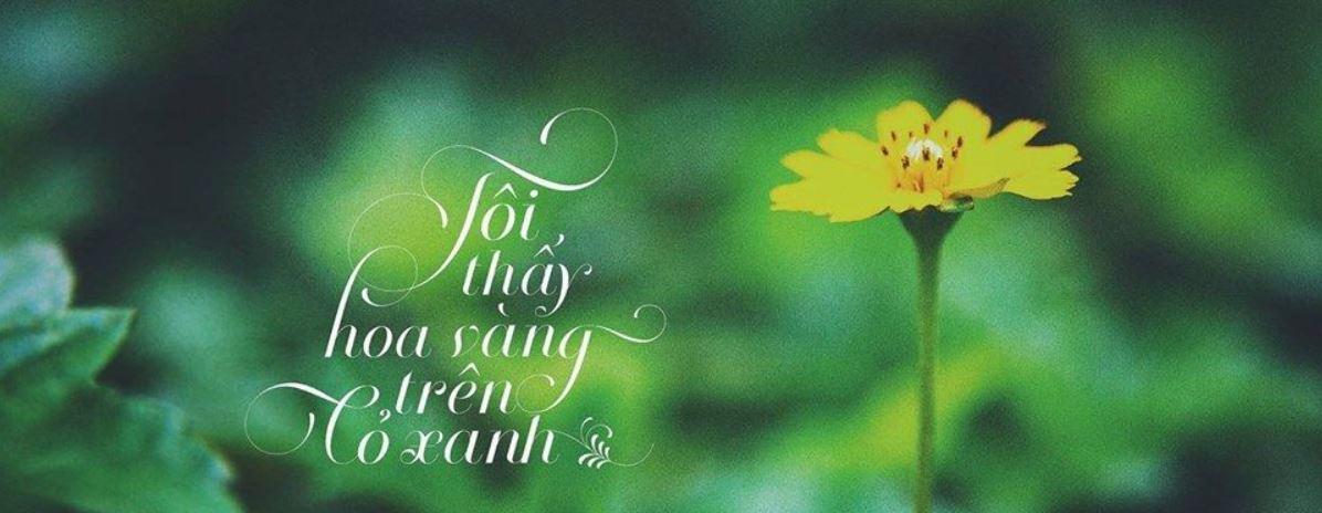 Review Tôi thấy hoa vàng trên cỏ xanh